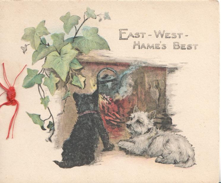 EAST-WEST-HAMES BEST,  study of black & white scotties in front of fire, ivy above left