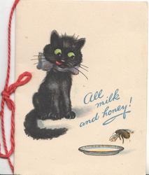 ALL MILK AND HONEY in blue, black cat sits  watching  bee about to land on plate