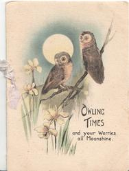 OWLING TIMES AND YOUR WORRIES ALL MOONSHINE.below 5 owls perched above yellow lilies, moon behind