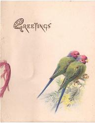 GREETINGS opt. in gilt above 2 green parakeets with red heads facing away, part right, ribbon left