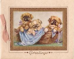GREETINGS in gilt, 3 pekingese puppies in basket, gilt border, ribbon left