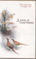 A COVEY OF GOOD WISHES 2 pheasants on ground facing left, 2 distantly fly right, evening rural scene