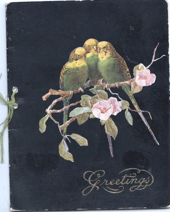 GREETINGS 3 yellow & green parakeets perched on apple blossom, black background