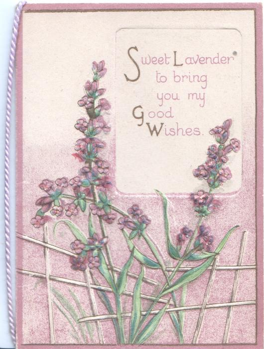 SWEET LAVENDER TO BRING YOU MY GOOD WISHES on white plaque above lavender