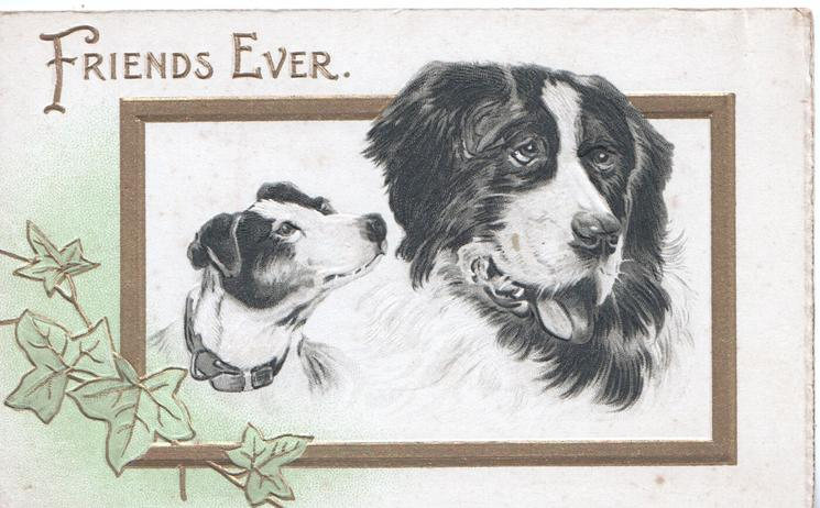 FRIENDS EVER in gilt above gilt bordered inset heads of Terrier & St. Bernard, ivy lower left