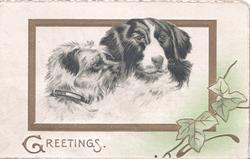 GREETINGS in gilt below gilt bordered inset heads of Scotch Terrier & Scotch Collie, ivy lower right