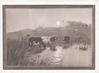 no front title, sepia moonlit rural scene, cows in marsh
