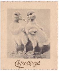 GREETINGS gilt embossed below grey/black inset of 2 ducklings