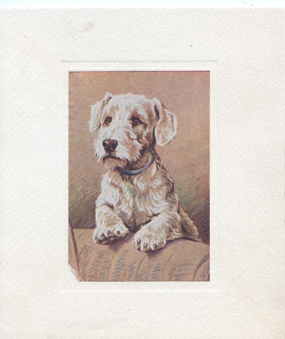 no front title, central inset, Sealyham terrier looking up left, brown background