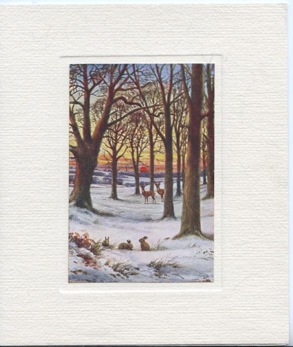 no front title, winter woodland scene, 3 rabbits & 2 deer, trees, evening scene