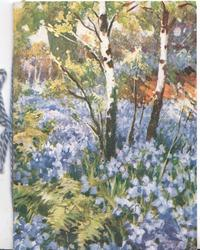 FAIR DAYS TO YOU in faint gilt at base of card depicting mass of bluebells, 2 silver birch trees
