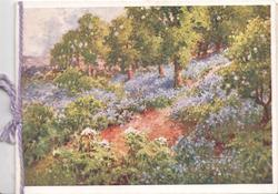 GREETINGS AND ALL GOOD WISHES very faint, path among bluebells on hillside, trees back