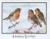 CHRISTMAS GREETINGS in gilt below gilt bordered inset of 3 perched English robins