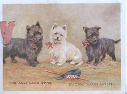 FOR AULD LANG SYNE  EVERY GOOD WISH white & 2 black scotch terriers looking front right