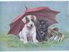 GOOD LUCK white puppy with brown eye patches & black cat shelter under pink umbrella beside golf clubs