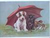SOUHAITS SINCERES white puppy with brown eye patches & black cat shelter under pink umbrella beside golf clubs