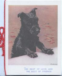 THE BEST OF LUCK AND THE BEST OF FRIENDS in blue black scotch terrier with paws up on ledge