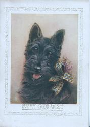 EVERY GOOD WISH below head & shoulders study of black scotch terrier looking front