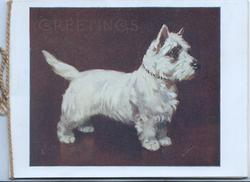 GREETINGS in gilt above white scotch terrier standing looking right