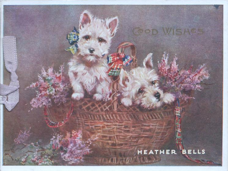 HEATHER BELLS, gilt GOOD WISHES  above 2 scotch terriers in basket with purple heather