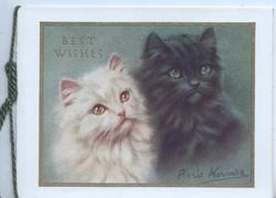 BEST WISHES (faint) above head & shoulders of white kitten left, black right, both look up/right