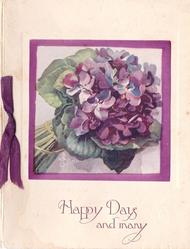 HAPPY DAYS AND MANY tightly bunched violets, stems lower left