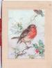 no front title,English robin perched by one leg on holly