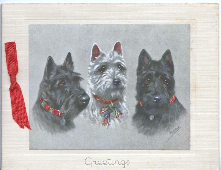 GREETINGS below head & sholder study of 3 Scotch terriers