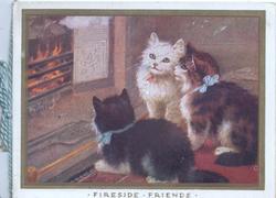 FIRESIDE FRIENDS 3 cats sit looking into blazing fire