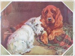 BEST WISHES faint in gilt white scotch terrier & golden brown retriever lyng togetther