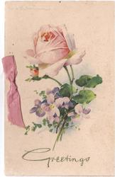 GREETINGS in gilt below pink rose with violets, pink ribbon left