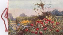 no front title, girl works in garden, red poppies  in front, big hedge behind