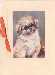 GREETINGS impressed at base below inset Pekinese puppy