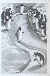 no front title, penguins as people, standing upright to observe & applaud  birds sliding erect downhill