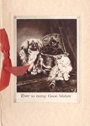 EVER SO MANY GOOD WISHES 2 kittens, one black & one white & pekingese pup