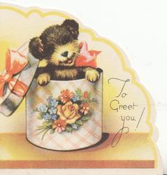 TO GREET YOU, puppy as gift in hat box decorated with flowers & ribbons