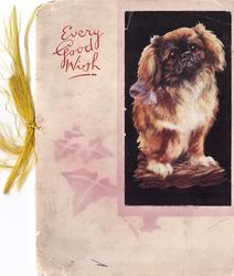 EVERY GOOD WISH opt. in red left of pekingese puppy on black, stenciled ivy below
