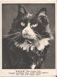 """FELIX"" THE LUCKY CAT portrait of cat"