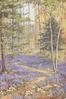 no front title, path among bluebells below silver birch & pine trees