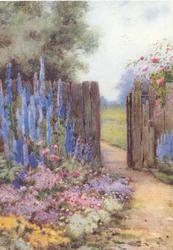 no front title, path leading to gate in wooden fence, blue delphiniums & many other flowers left