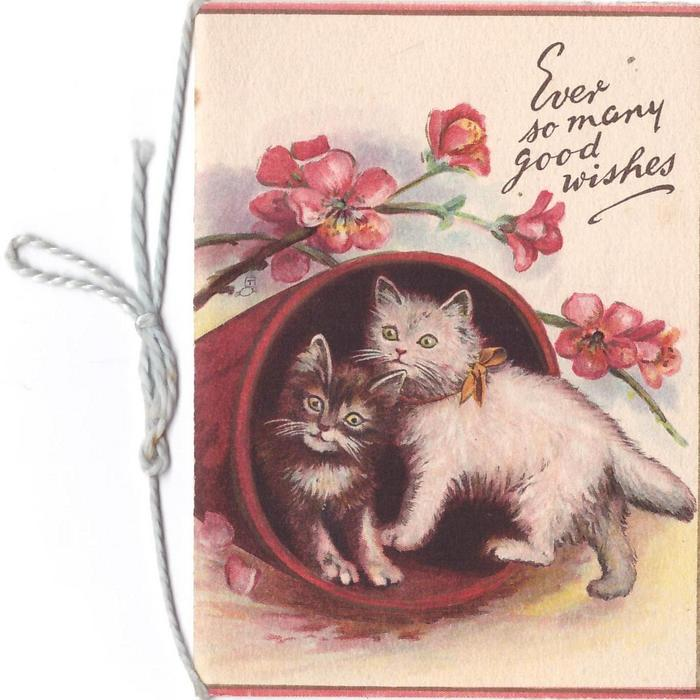 EVER SO MANY GOOD WISHES 2 kittens inside overturned flower pot, pink blossoms behind