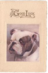 GOOD LUCK in gilt above inset head & shoulders of bulldog, platemarked style