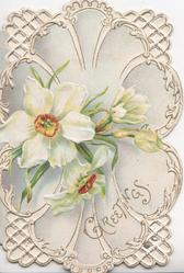 GREETINGS in gilt below,narcissi in shell shaped design,  4 perforated cormer designs