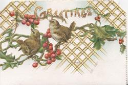 GREETINGS in gilt above 2 birds perched on holly, lattice design