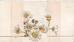 no front title, white daisies with yellow centres across space between 2 flaps,