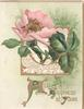 ALL HAPPINESS BE YOURS(A,H & Y illuminated) below pink wild rose over perforated gilt design