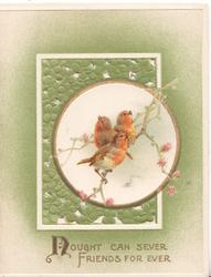 NOUGHT(N illuminated CAN SEVER FRIENDS FOR EVER, 3 robins perch on blossom in circular inset in front of leafy white framed perforated design, green background