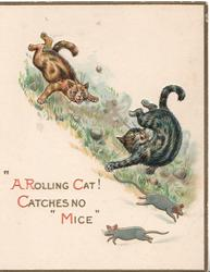 """A ROLLING CAT! CATCHES NO MICE"" 2 mice below 2 cats rolling down hill"