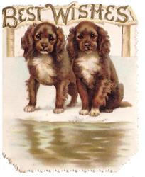 BEST WISHES in gilt above 2 puppies one stands, one sits across water