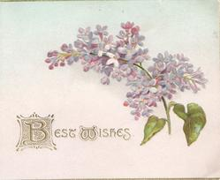 BEST WISHES(B illuminated) in gilt left below purple lilac